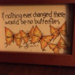 no butterflies